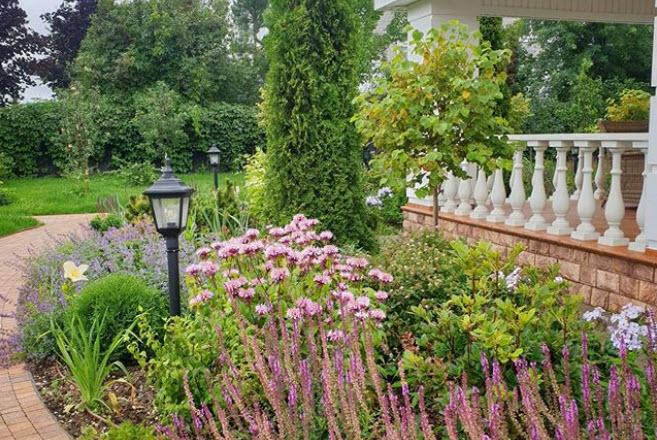 Растения возле дома