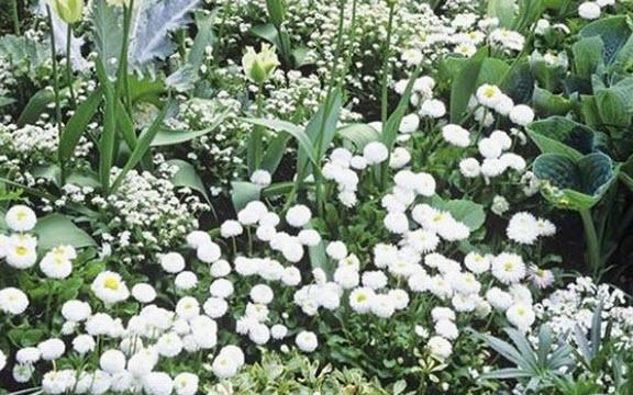 Белый монохромный цветник