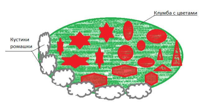 Схема посадки ромашки