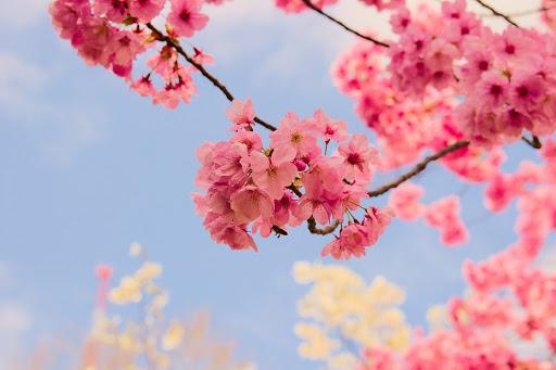 Какие красивые декоративные деревья посадить на участке, вдоль забора и перед домом?
