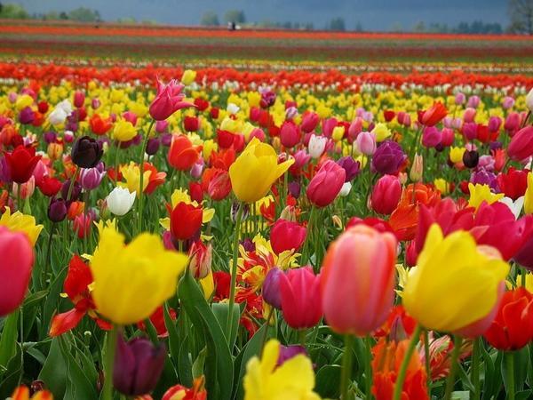 30 неприхотливых многолетних долгоцветущих цветов для сада, которые не потребуют от вас особого ухода. Названия и фото