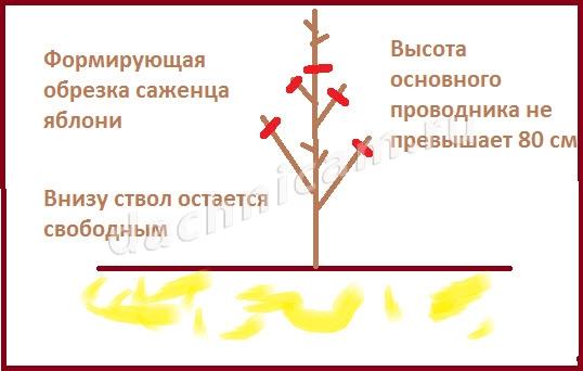 Когда необходимо проводить санитарную, декоративную обрезку деревьев и кустарников, вырубку молодой поросли по СанПиН?