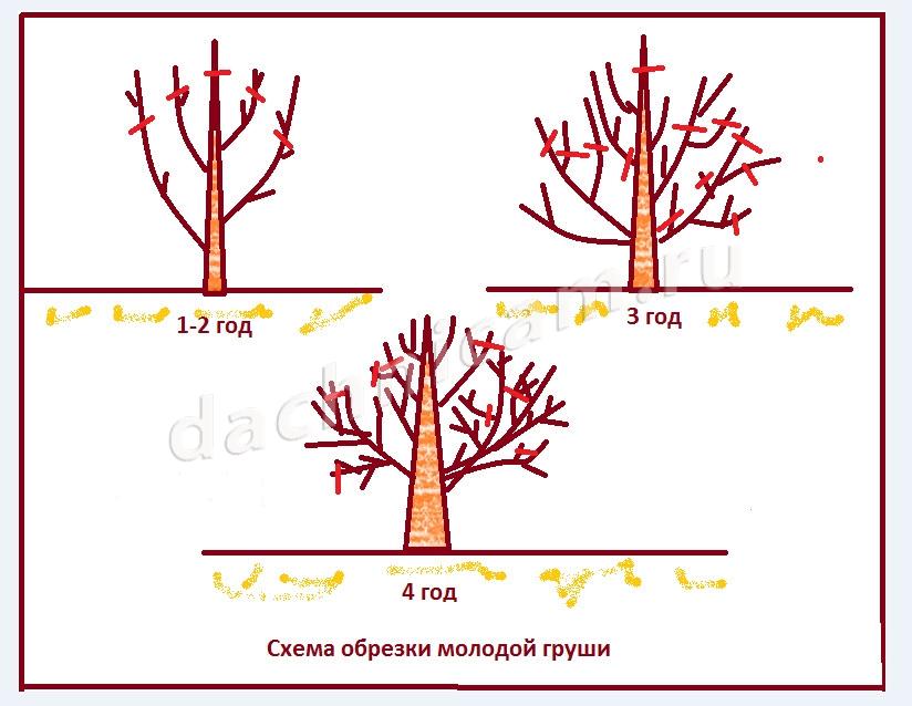 когда делать обрезку плодовых деревьев